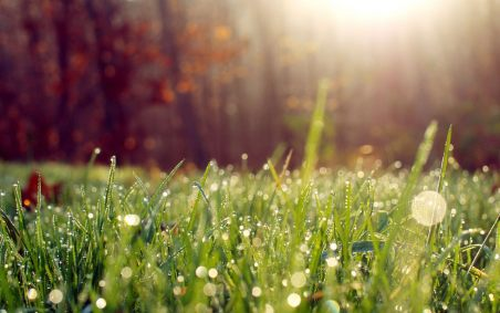 Beautiful summer morning dew tablet wallpapers 1280x800 (05)