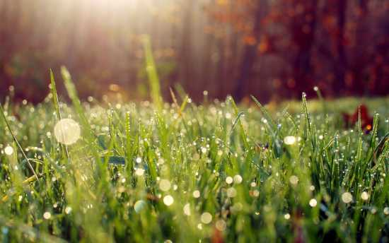 wet-grass-in-the-morning-light-wallpaper-28387