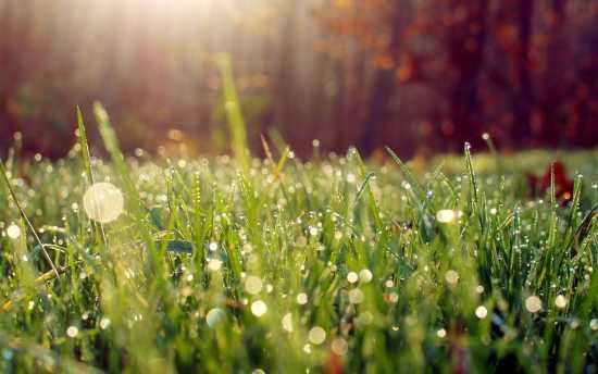 wet-grass-in-the-morning-light-wallpaper-28387