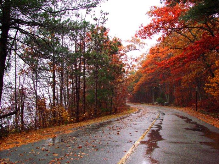 autumn_rain_in_the_park_xi_by_pandi1818-d4fqbin
