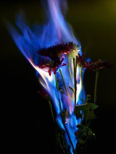 aa10a09e103fa02228e60e3d1f33e536-experiment-art-photography
